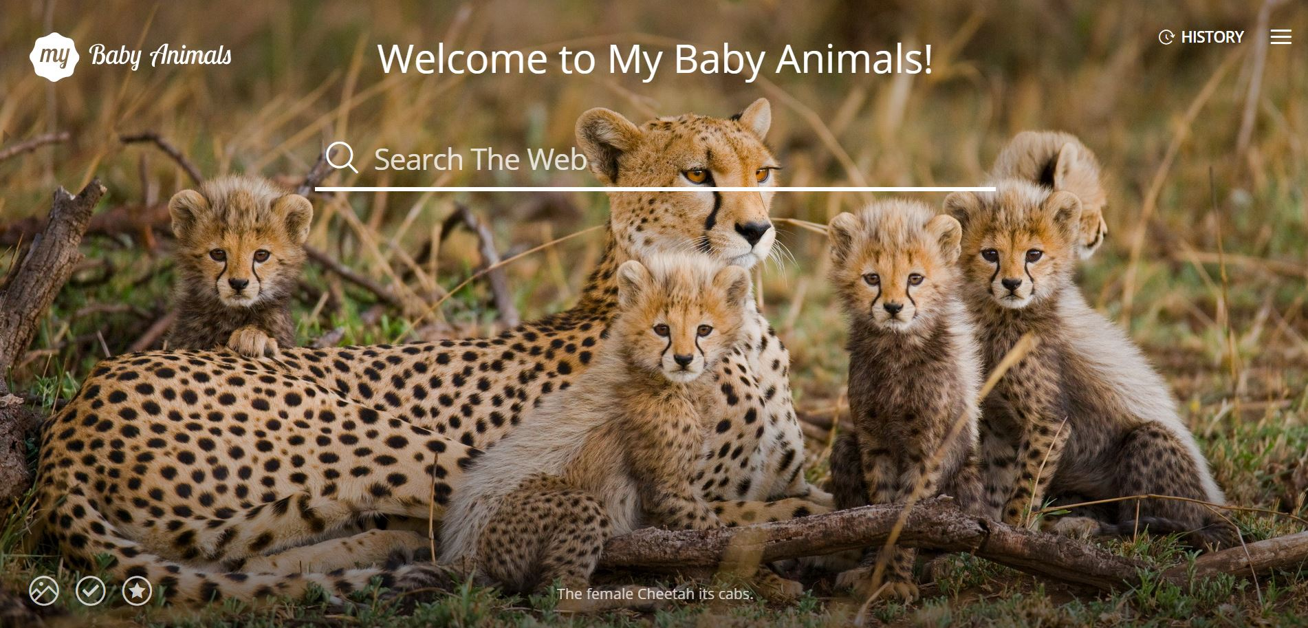 My baby animals images