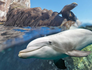 dolphin and sea lion underwater on ocean