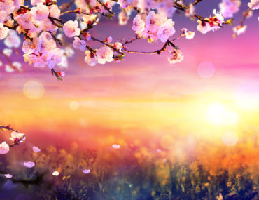 Fun facts about spring