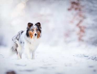 dog playing in winter snow