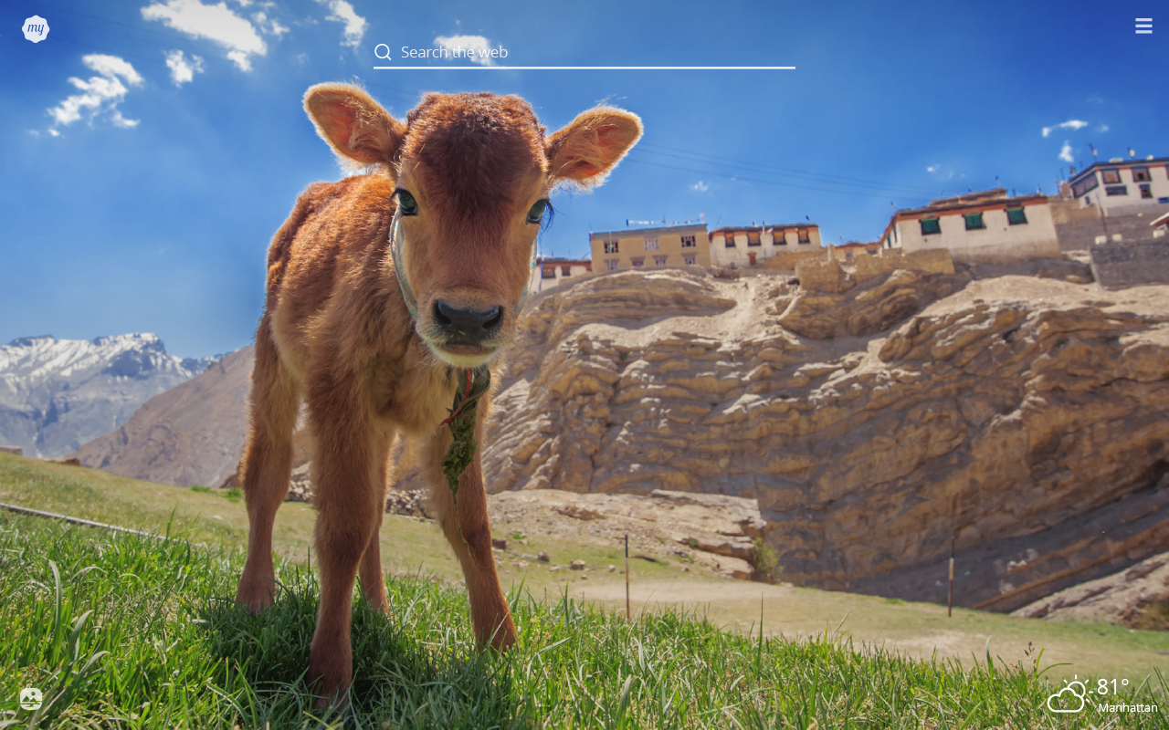 My Baby Cows Hd Wallpapers New Tab Theme Mystart