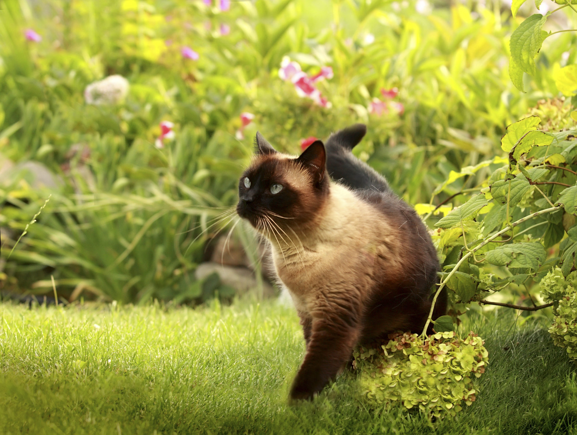 cute cat in the grass
