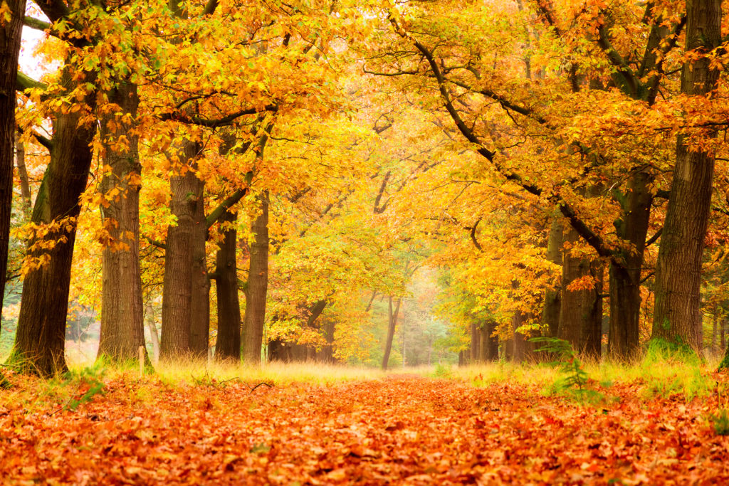 My Autumn Season HD Wallpapers New Tab Theme