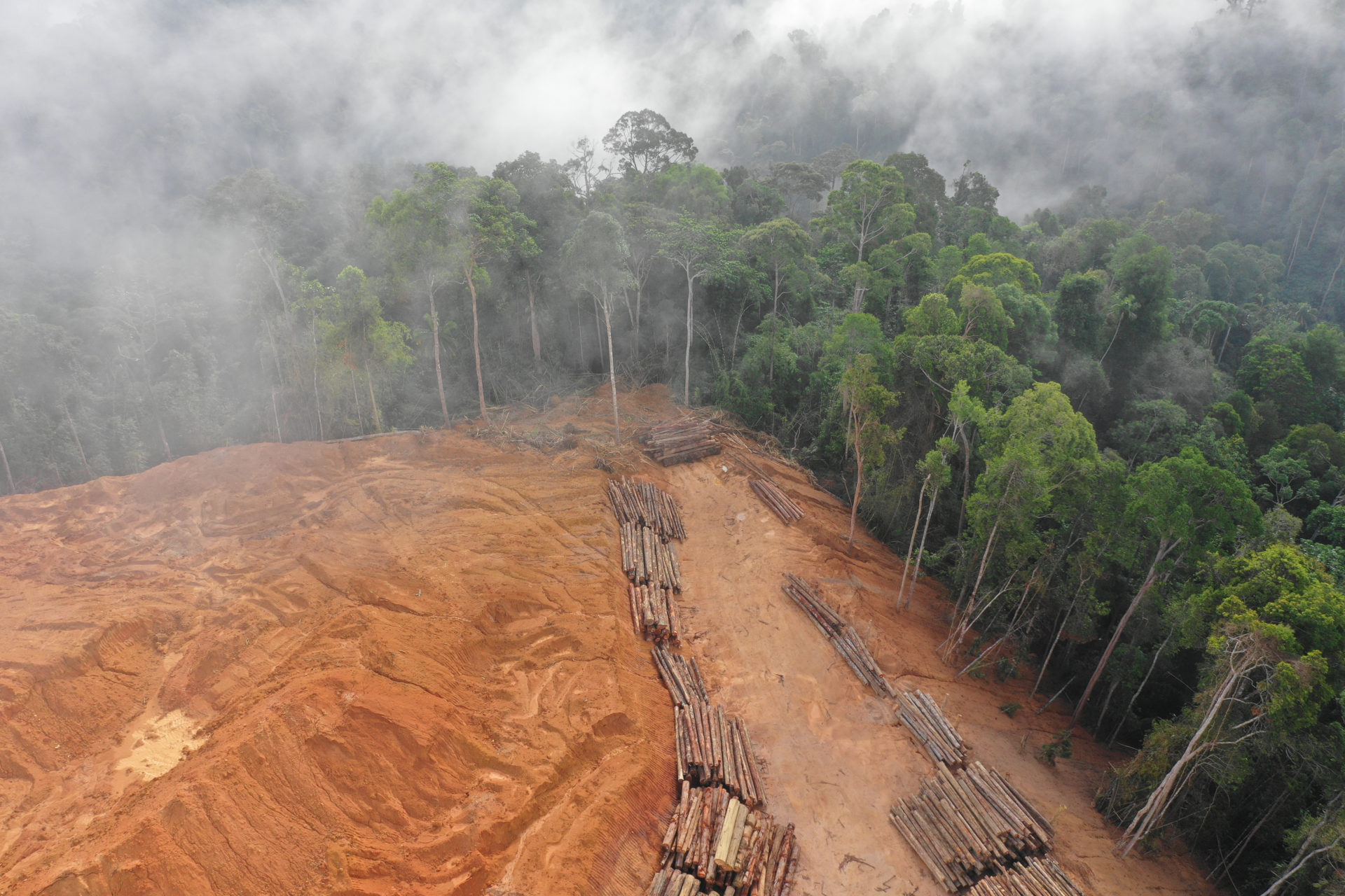 Aerial photo of deforestation.