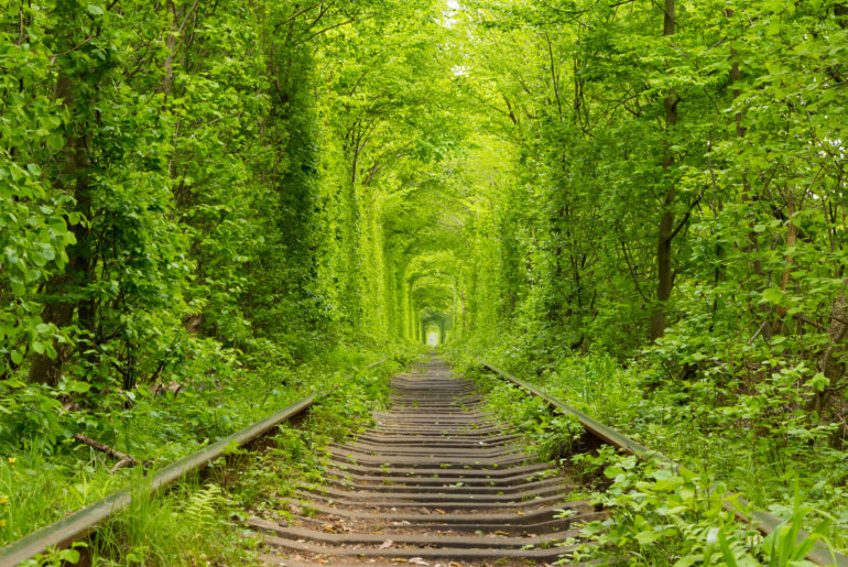 Tunnel of Love forest