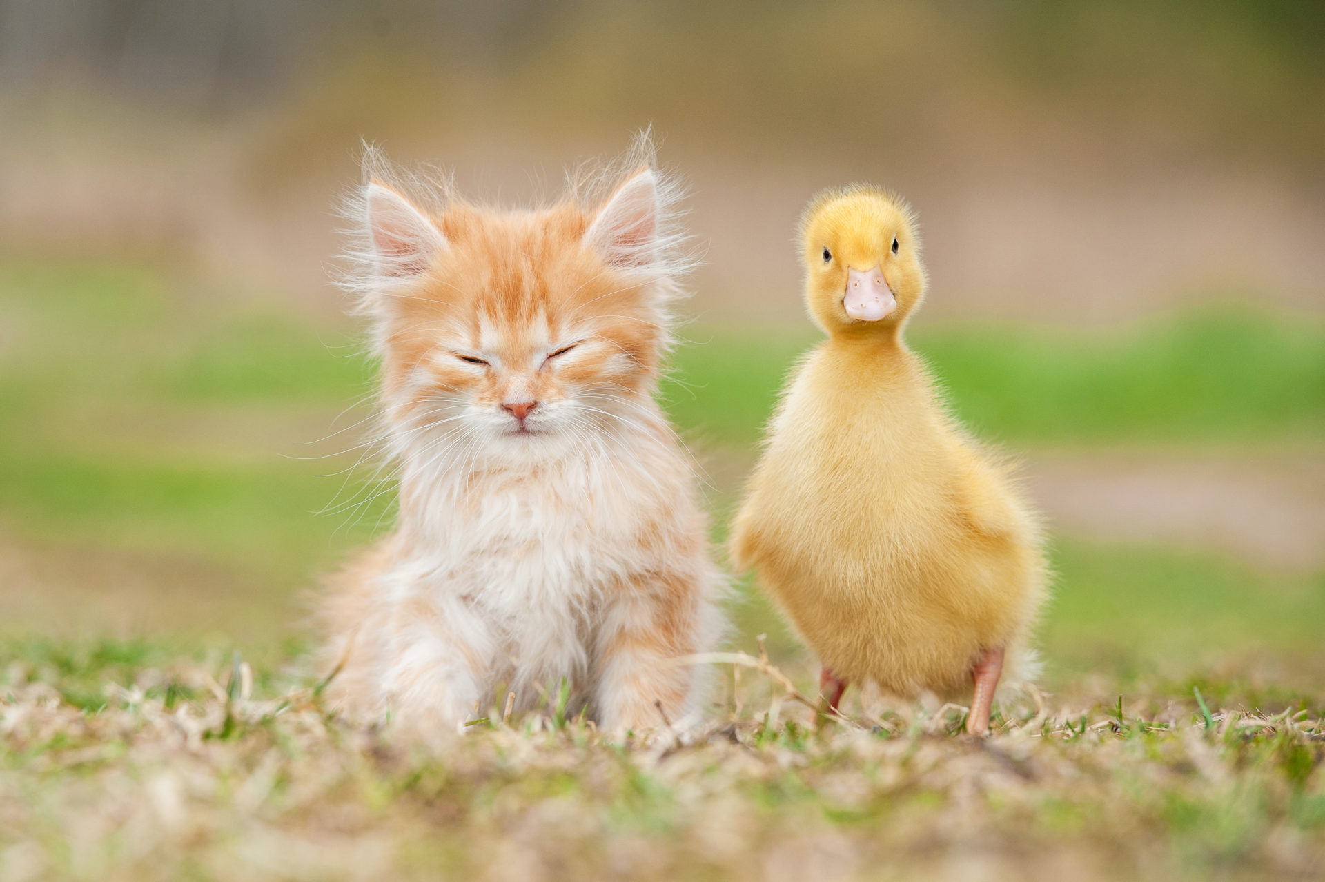 Adorable Baby Animal Facts That Will Make You Go Aww Mystart