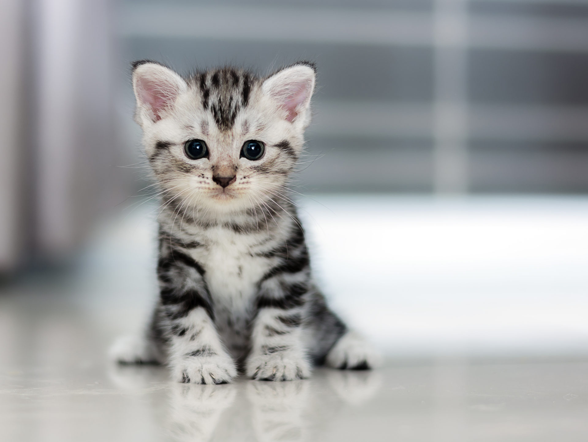My Cats Adorable Cat Kitten Hd Wallpapers Mystart